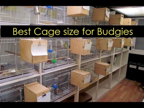 best for best cage size for budgies what is best size for