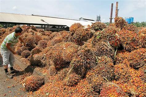Minyak Kelapa Sawit Per Ton ekspor minyak sawit ri naik 6 5 jadi 3 5 juta ton