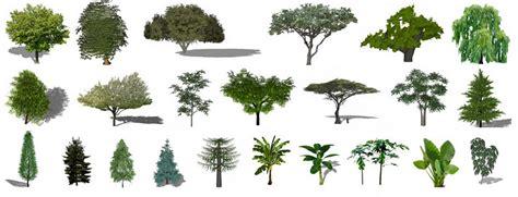 planta 3d descargar plantas 225 rboles 2d 3d sketchup construye hogar