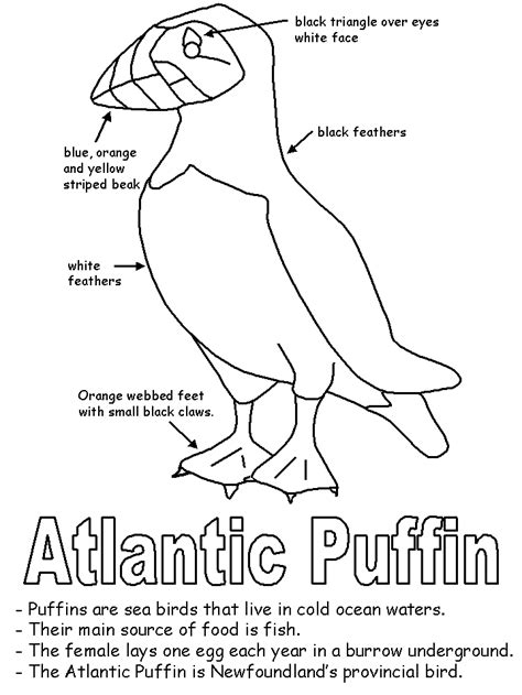 newfoundland map coloring page puffin with labels