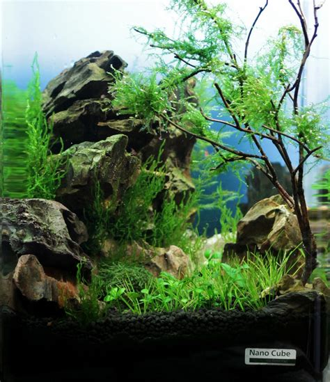 aquascaping plants posts events and tanks on pinterest