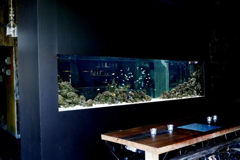 aquarium design x adn aquarium design waterscapes aqu 225 rios personalizados