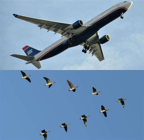 is it a bird is it a plane biomimicry in airplanes