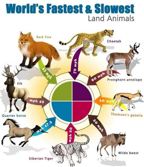 Animal Land 12 ashok s december 2010