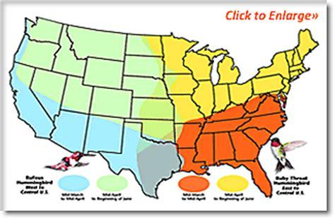 hummingbird migration facts and information birdfeeders