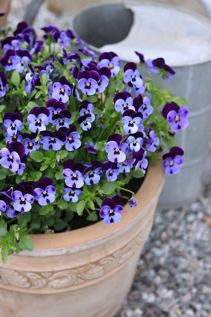 best flowers for small pots 25 best ideas about winter container gardening on
