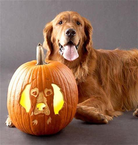 puppy pumpkin carving pumpkin carving patterns and pumpkin carving designs random talks