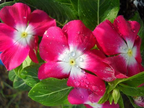foto di fiori primaverili fiori primaverili fiori di piante fiori primavera