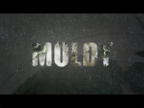 is hidden fungus making you ill mark hyman md moldy the toxic mold movie watch it now
