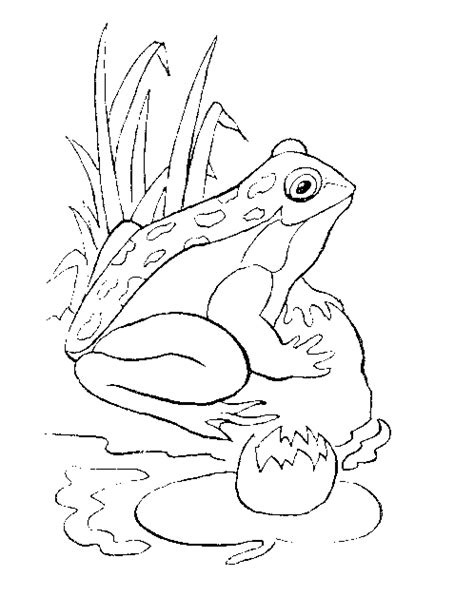 reptile coloring pages coloring pages