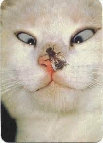 zurcher blog weird cats