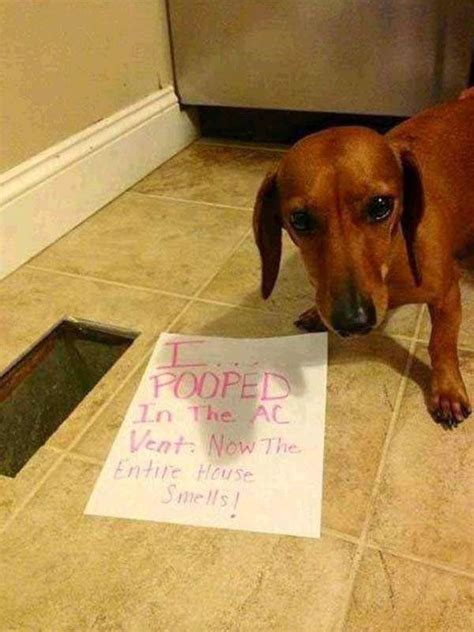 puppy shaming you will die laughing after seeing these shaming pics