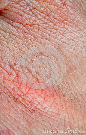 human skin macro picture stock photo 169 jugulator 25119063 human skin macro stock photo image 50834585