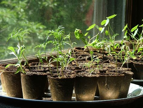 Starting A Garden From Seeds by How To Start Cheap Plants Germinating Seeds Cheaply And