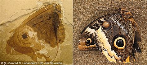 rocks butterflies books researchers find prehistoric creature that looks and acts