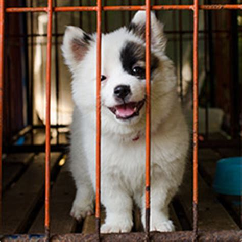define puppy mill laws regarding puppy mills