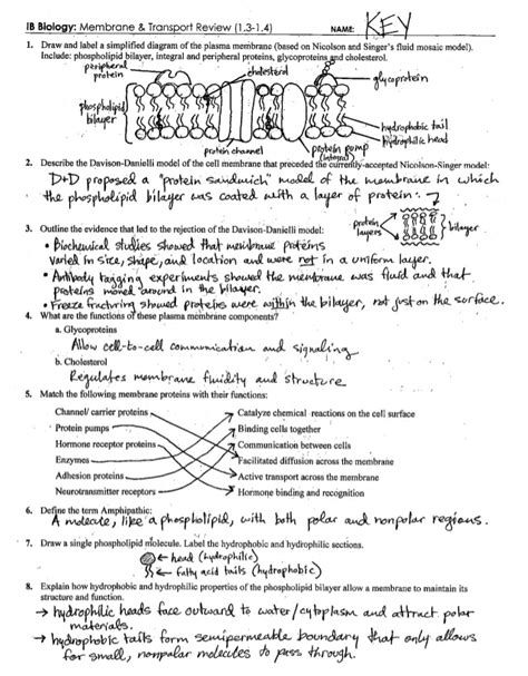 Cell Membrane Transport Worksheet by Cell Transport Worksheet Answers Lesupercoin Printables