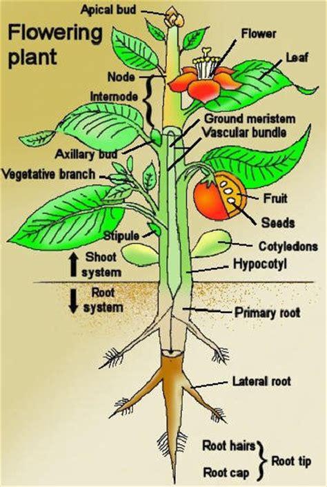 Biologi U ringkasan bio kelas 8 materi ke ii struktur tumbuhan