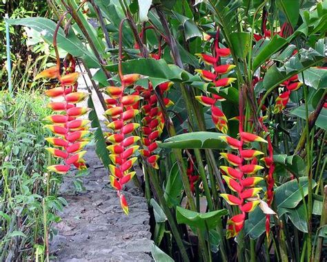 tropical rainforest plants tropical plants in guatemala in the garden of the porta