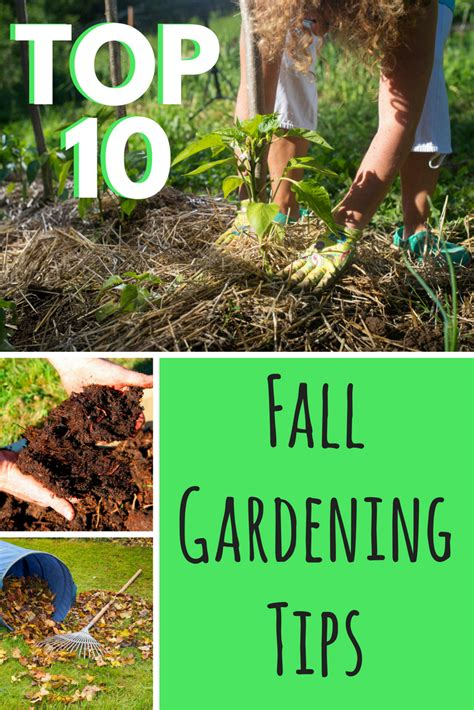 top 10 fall gardening tips gardening know how s blog