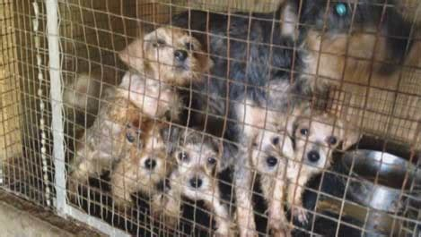 just puppies puppy mill why don t you just shutdown the puppy mills