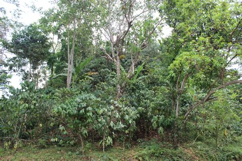 naik haji  merawat hutan cerita kesuksesan hkm