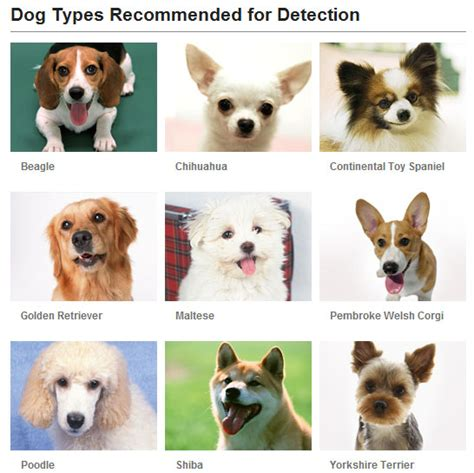 what type of is doge what of can fujifilm detection detect justin my