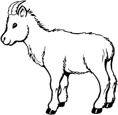 coloring pages of goat baby goat coloring page supercoloring com