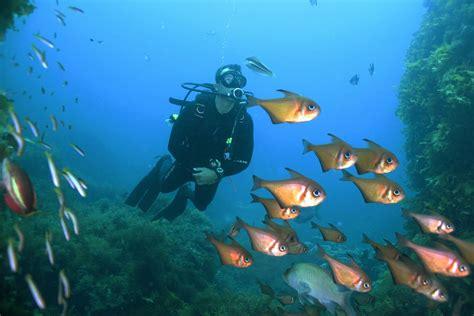 padi dive padi open water diver perth diving