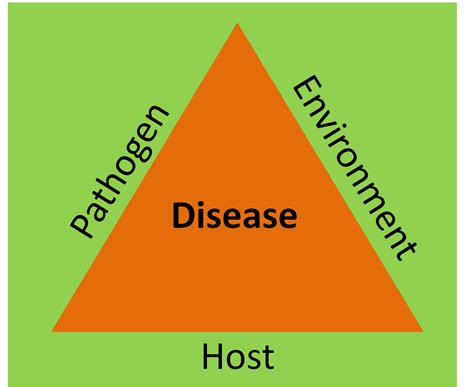 veria living health fitness diseases conditions the disease triangle and the one health concept parasite