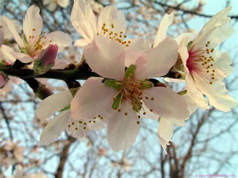 imagenes flores exoticas gratis flores del mundo bellos fondos de flores exoticas