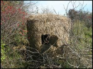 Building A Hay Bale Blind I Cant Find Hay Bale Blinds
