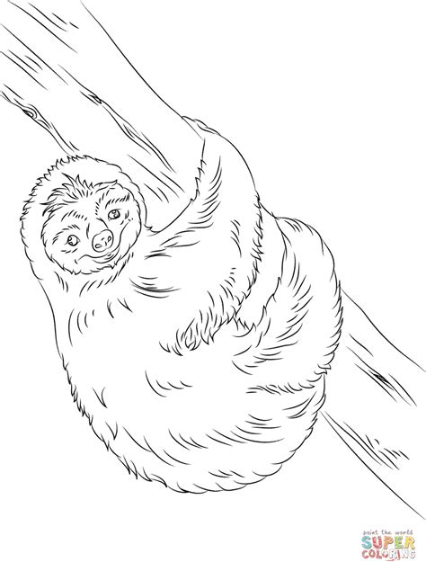 cute sloth coloring page free printable coloring pages