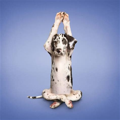imagenes yoga animales banco de im 225 genes para ver disfrutar y compartir 10