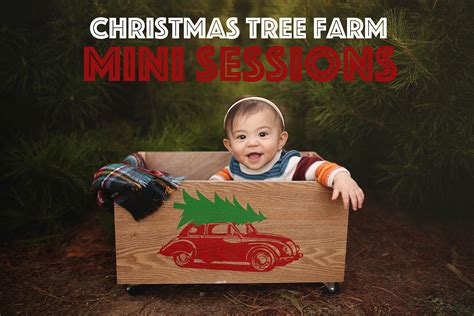 pictures on christmas tree farms los angeles easy diy