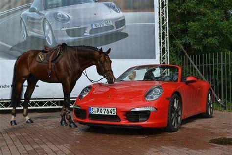 ferrari horse vs mustang horse tb vs ferrari equine ink