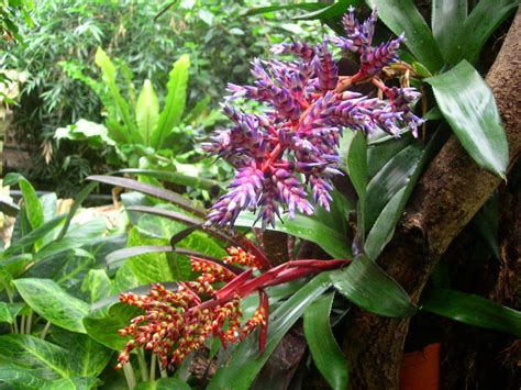 Plants From The Tropical Rainforest - tropical rainforest plant 8 pictures of tropical rainforest pictures of plants biological