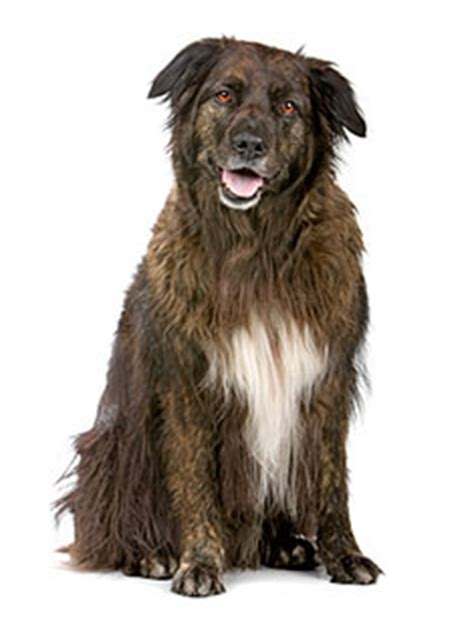 scruffy breeds mixed breed dogs