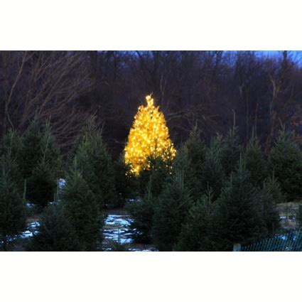 christmas tree traditions at our local farms rhinebeck