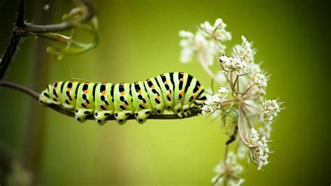 Full HD Wallpaper caterpillar striped stick, Desktop