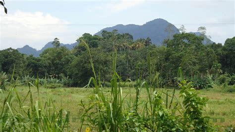 Forest Resources Essay by Toronto Arborist Essay On Forest Resources Of Assam