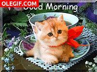 imagenes de buenos dias gif gif 161 buenos d 237 as gif 3926