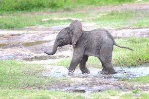 baby elephant wallpapers baby animals