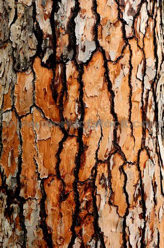 brown tree pattern stock photo titled tree bark texture close up unlicensed