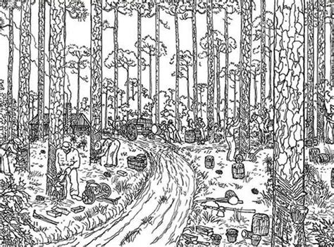 trees logging rainforest coloring page  print