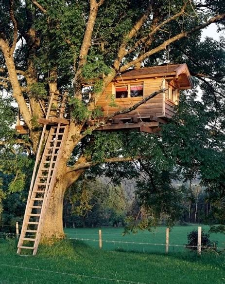 crazy tree houses joe crazy treehouse cool tree houses pinterest