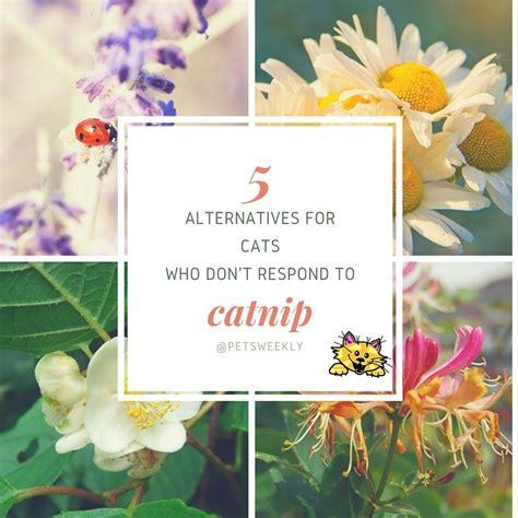 best catnip top 5 alternatives to catnip