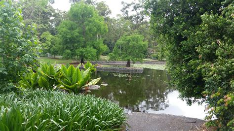 Mt Cootha Botanic Gardens Elopement Spots At Mt Coot Tha Botanical Gardens Brisbane City Celebrants