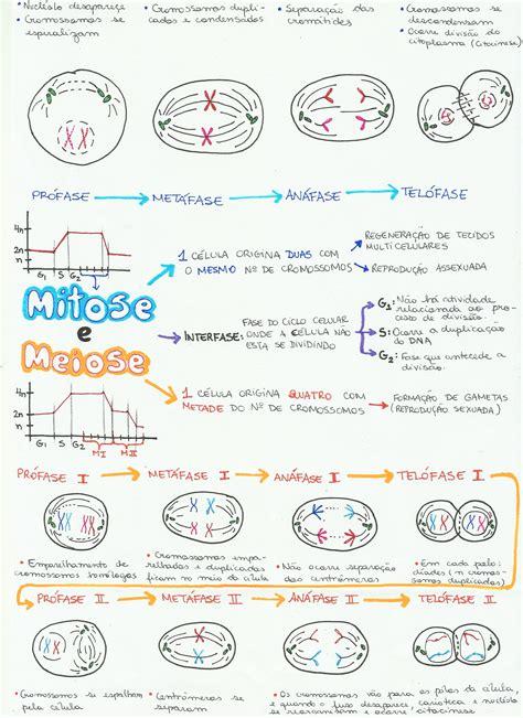 anna mitose e meiose desconversa mapa mental mitose e meiose