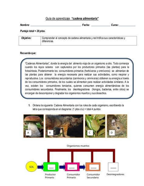 prueba de cadenas y tramas alimentarias guia de aprendizaje cadena alimentaria